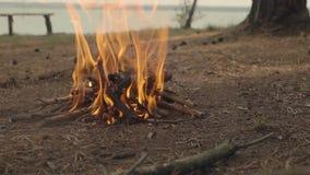 在河沿湖森林沼地野营的灼烧的篝火 长凳,树背景 影视素材