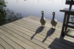 在河沿的两只陶瓷鸭子 库存照片