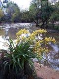 在河沿的兰花 免版税图库摄影