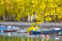 在河沿的春天 免版税库存图片