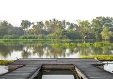 在河沿的木小码头与热带树 图库摄影