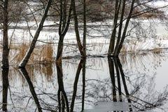 在河洪水的结构树 免版税库存照片