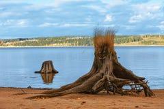 在河海岸的装饰的树桩 图库摄影