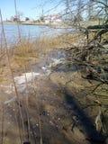 在河的低潮 免版税库存图片