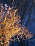 在河的冷的秋天早晨 免版税库存照片