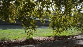 在河的叶子 股票视频