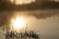 在河的夏天早晨 库存图片