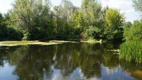 在河的夏天 免版税库存照片