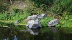 在河的夏天 库存照片