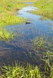 在河的小河 库存图片