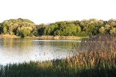 在河的日落 芦苇 库存照片