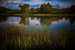 在河的春日 库存照片