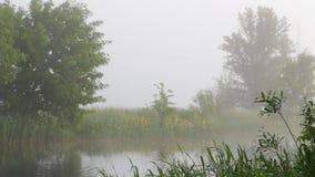 在河的有薄雾的早晨 股票视频