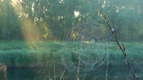 在河的有薄雾的黎明有第一阳光的 股票录像