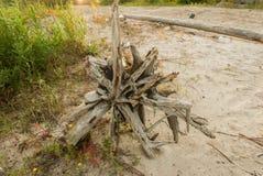 在河的有趣的漂流木头 库存照片