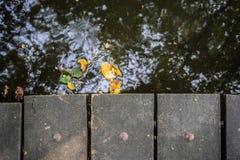 在河的木板条 库存照片