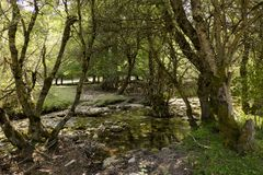 在河的树 库存照片
