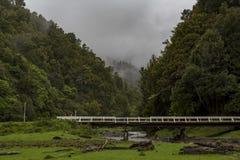 在河的桥梁有森林围拢的 免版税库存图片