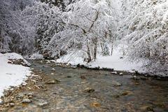在河的河岸的一棵多雪的树 免版税库存照片