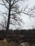 在河的河岸的春天树 库存图片