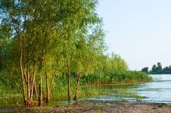 在河的河岸的树 库存照片