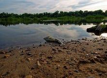 在河的河岸的死的鱼 免版税库存照片