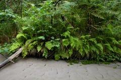 在河的河岸的蕨 图库摄影