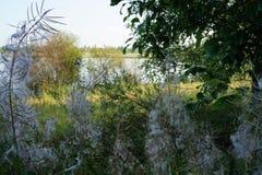 在河的海岸的意想不到的木头 图库摄影