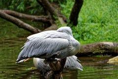 在河的白色鸟 免版税库存照片