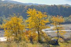 在河的秋天叶子 免版税库存照片