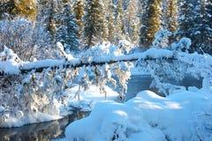 在河的美好的冬天日落在俄罗斯 免版税库存照片