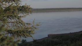 在河的背景的树 股票视频
