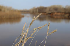 在河的背景的钉 库存照片
