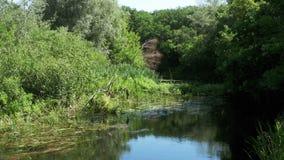 在河的自然,在河的河岸的绿色植被 影视素材