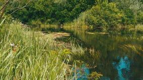 在河的自然,在河的河岸的绿色植被 股票视频