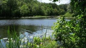 在河的自然,在河的河岸的绿色植被 股票录像