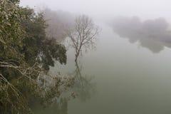 在河的薄雾 免版税库存照片