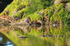 在河的被反射的植被 免版税库存照片