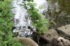 在河的许多反射 库存照片