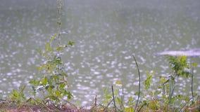 在河的雨珠在夏天 股票视频