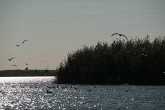 在河的鸥 库存图片