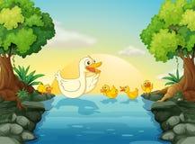 在河的鸭子 免版税库存照片