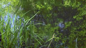 在河的黑蜻蜓 影视素材
