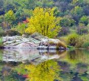 在河端结构树附近的秋天 图库摄影