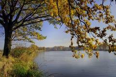 在河结构树附近的草 库存图片