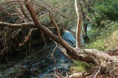 在河结构树 免版税图库摄影