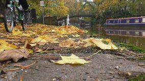 在河边的骑自行车者在秋天公园 股票录像