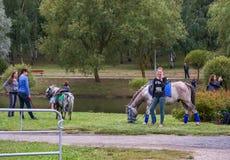 在河附近是女孩并且收留马勒的马 免版税库存照片