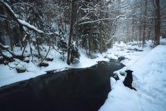 在河附近的孤独的狗在冬天森林里 免版税图库摄影