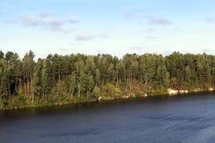在河附近的树, 免版税库存照片